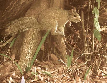 Grace Dillon - Gray Squirrel
