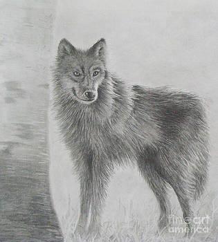 Phyllis Howard - Gray Wolf