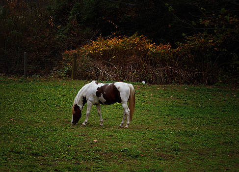 Grazing Beauty by Annette Childress