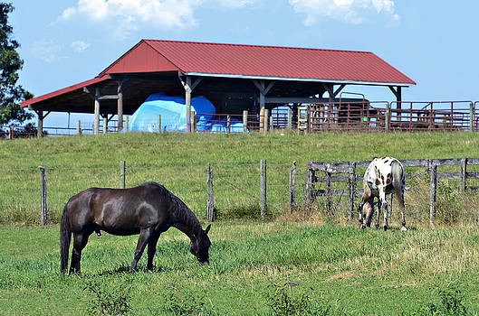 Grazing Below the Shed by Susan Leggett