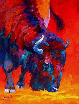 Marion Rose - Grazing Bison