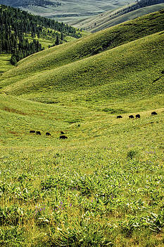 Paul W Sharpe Aka Wizard of Wonders - Grazing Bison on Grass Hills