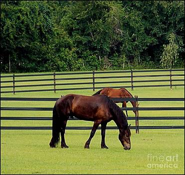 Grazing Horses by Annette Allman