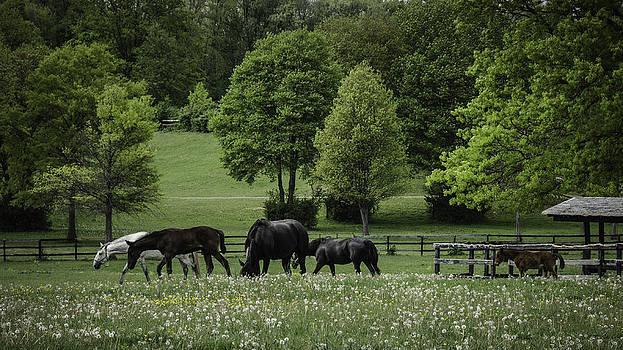 Grazing Horses by Eleanor Bortnick