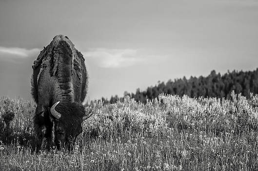 Grazing II  by Off The Beaten Path Photography - Andrew Alexander