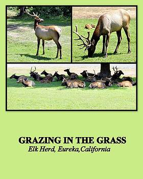 Grazing in the Grass by AJ  Schibig