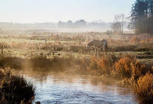 Grazing In The Mist by Odd Jeppesen