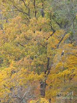 Minding My  Visions by Adri and Ray - Great Bald Eagle Autumn Forest