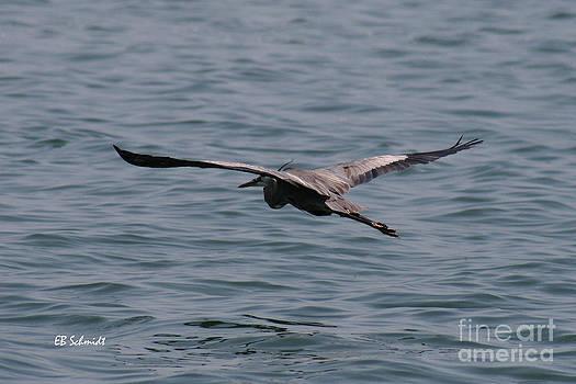 Great Blue Heron 01 by E B Schmidt