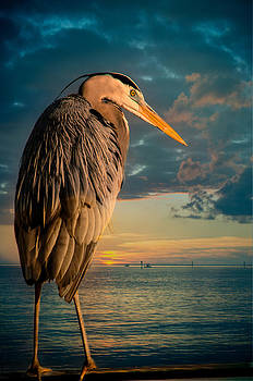Ludmila Nayvelt - Great Blue Heron and Blue sunset