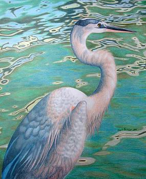 Great Blue Heron by Angela DeRiso