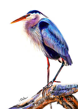 Great Blue Heron by Chelsea Perez