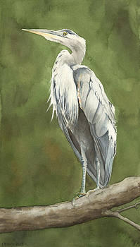 Great Blue Heron by Elizabeth R Smith
