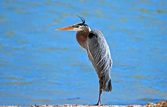 Eric Rundle - Great Blue Heron