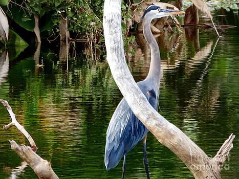 Great Blue Heron by Nelin Reisman