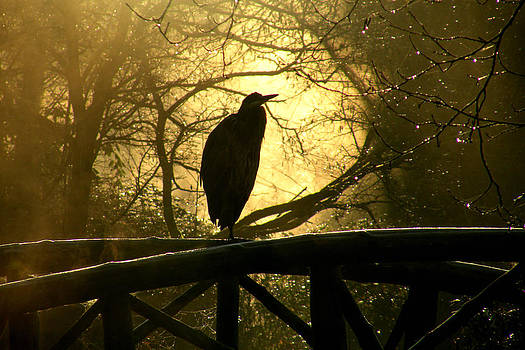 Great Blue Heron Silhouette by Brian Chase