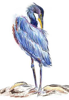 Ellen Miffitt - Great Blue Heron Tidies his Feathers