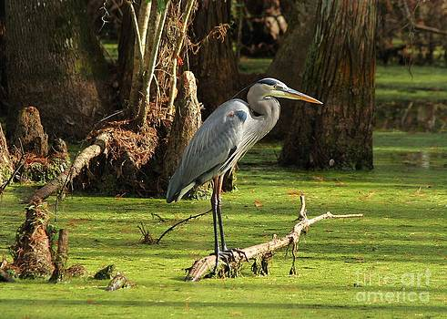 Great Blue in a Green Swamp by Theresa Willingham