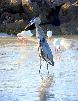 Linda Rae Cuthbertson - Great Blue Heron and White Ibis