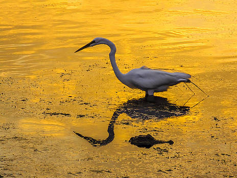 Terry Shoemaker - Great Egret and friend at Sunset