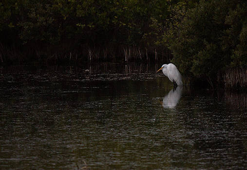 Great Egret Chilling by Suzie Banks