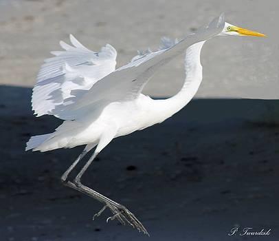 Patricia Twardzik - Great Egret Dancing