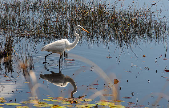 Great Egret by Don L Williams