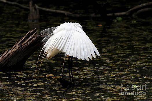 Great Egret by Doris Dumrauf