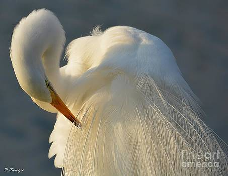 Great Egret Grooming by Patricia Twardzik