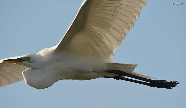 Patricia Twardzik - Great Egret in Flight