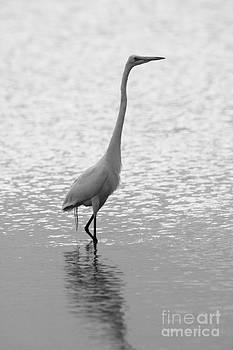Great Egret Light by John F Tsumas
