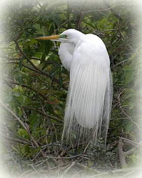 Great White Egret by Martha Lyle