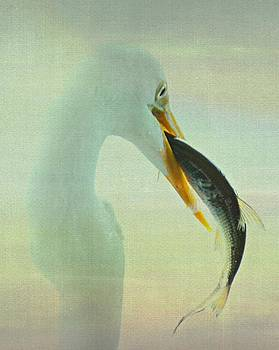 Erin Tucker - Great Egret with Fish