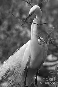 Courtship Nest Branch by John F Tsumas