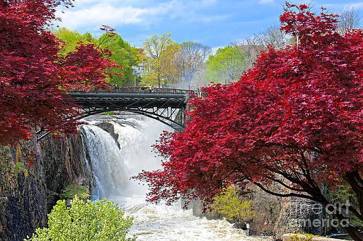 Regina Geoghan - Great Falls National Park N.J. Spring Scene II