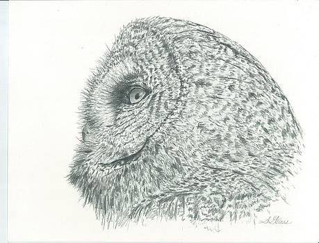 Great Grey Owl by Sarah Bevard