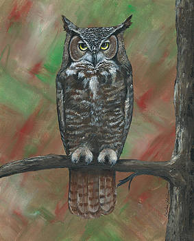 Great Horned Owl by Christine StPierre