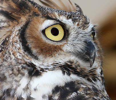 Erin Tucker - Great Horned Owl