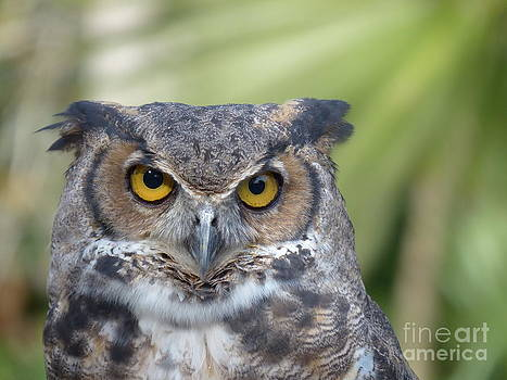 Christine Stack - Great Horned Owl Portrait