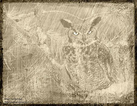 LeeAnn McLaneGoetz McLaneGoetzStudioLLCcom - Great Horned Owl Scratchings