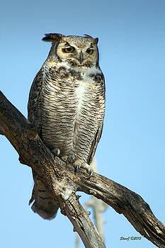 Great Horned Owl  by Stephen  Johnson