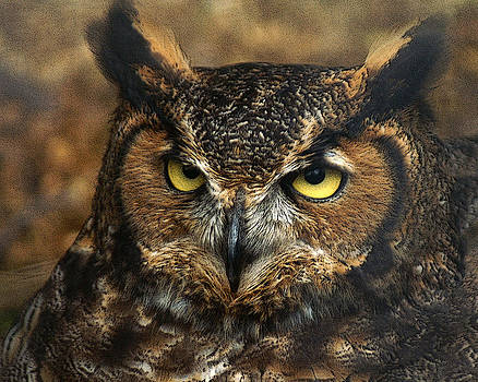 TnBackroadsPhotos  - Great Horned Owl