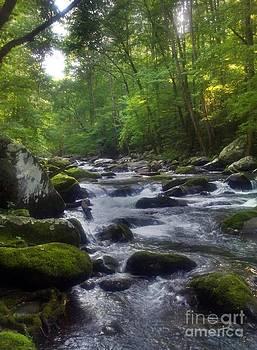 Great Smoky Mountain Creek by Janice Spivey