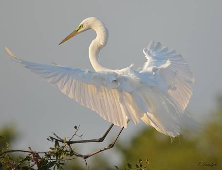 Patricia Twardzik - Great Spreads Its Wings
