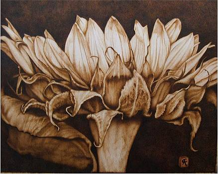 Great Sunflower no color by Cynthia Adams