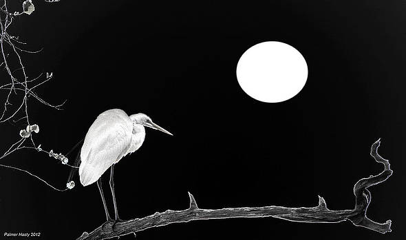 Great White Egret at Night by Palmer Hasty