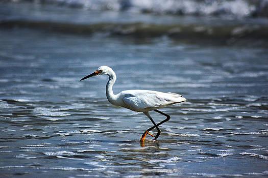 Great White Egret by George Ferreira