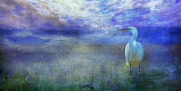 Great White heron by Deborah Mix