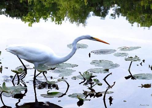 Buzz  Coe - Great White Heron II