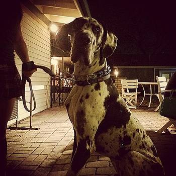 #greatdane by Kross Media